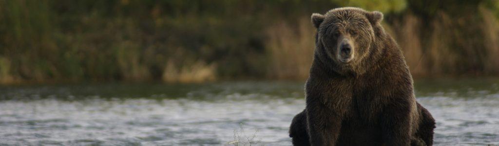 bear-2095379_1920