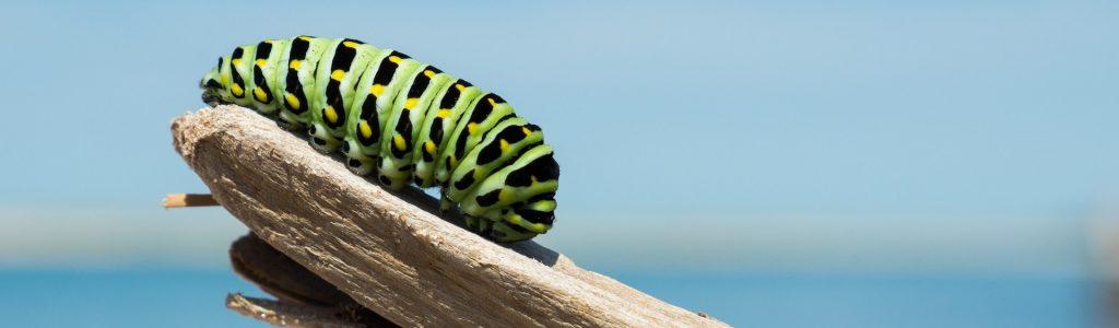 caterpillar-1209834_1920 edit
