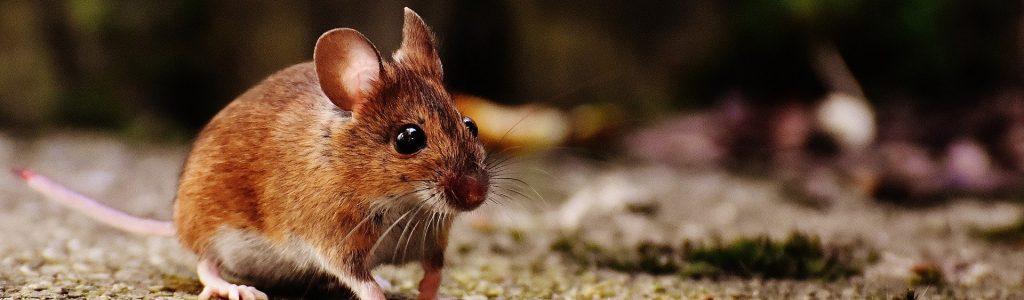 mouse-1708347_1920 edit